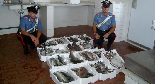 Sequestro di pesce a porto torres alghero eco - Sequestro prima casa ...